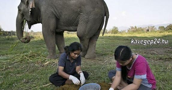 Kopy Luwak-Elefant kave
